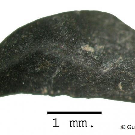 Resto de Rubus procedente del yacimiento de Santa Maira