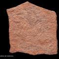 Plaquette en pierre gravée avec motifs de serpent